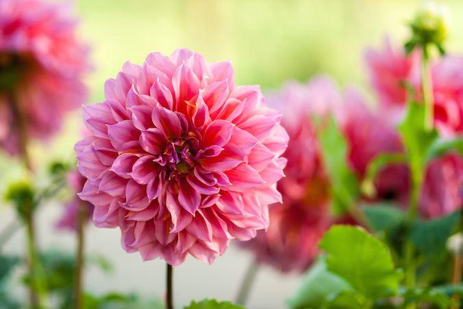 flowermeaning.com