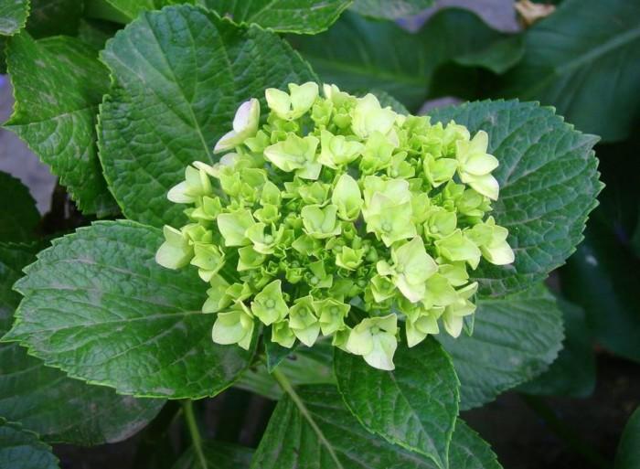 50 Gambar Bunga dan Tanamah Hias Terindah di Dunia (GAMBAR ...