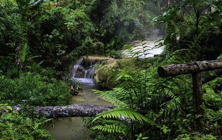 13+ Hewan dan tumbuhan termasuk sumber daya alam terupdate